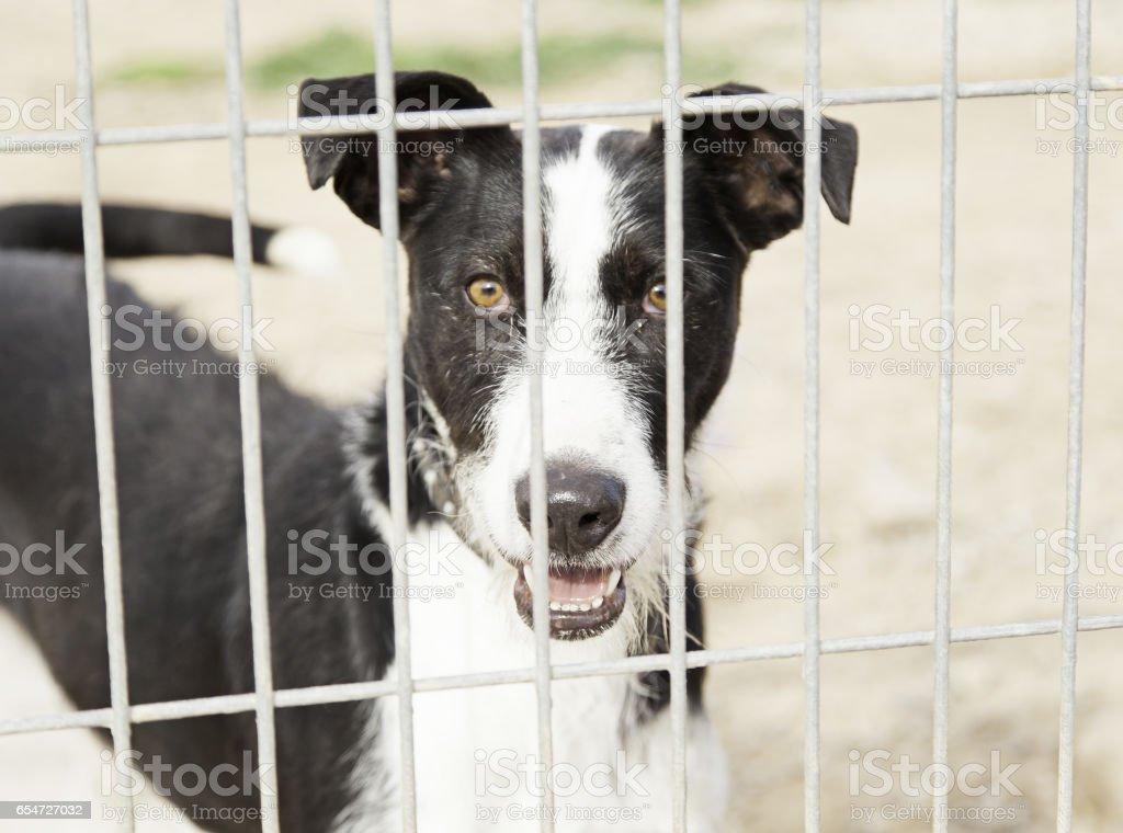 Abandoned hunting dog stock photo