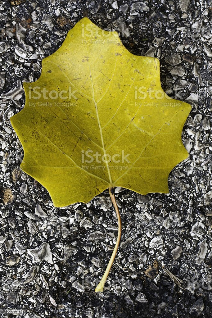 abandoned leaf royalty-free stock photo