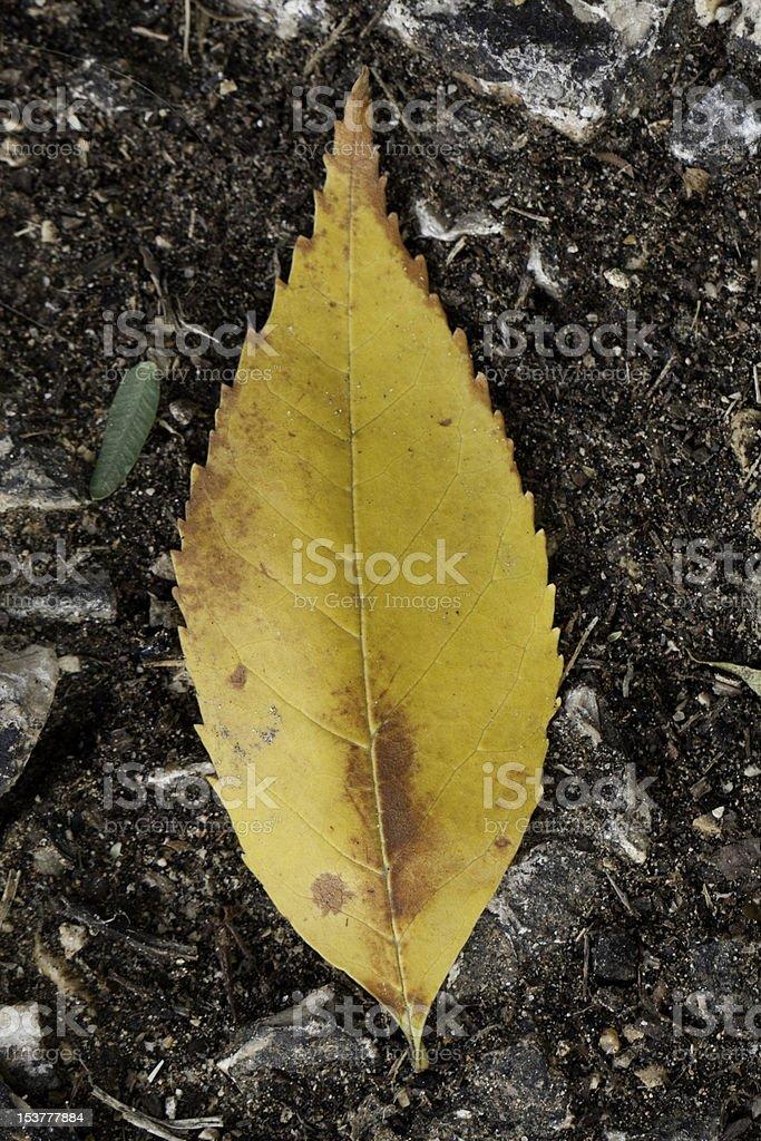 abandoned leaf royalty-free stock photo