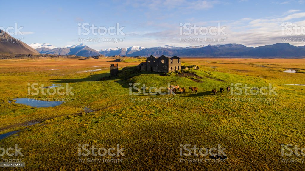 Abandoned old house and Icelandic horses on field stock photo