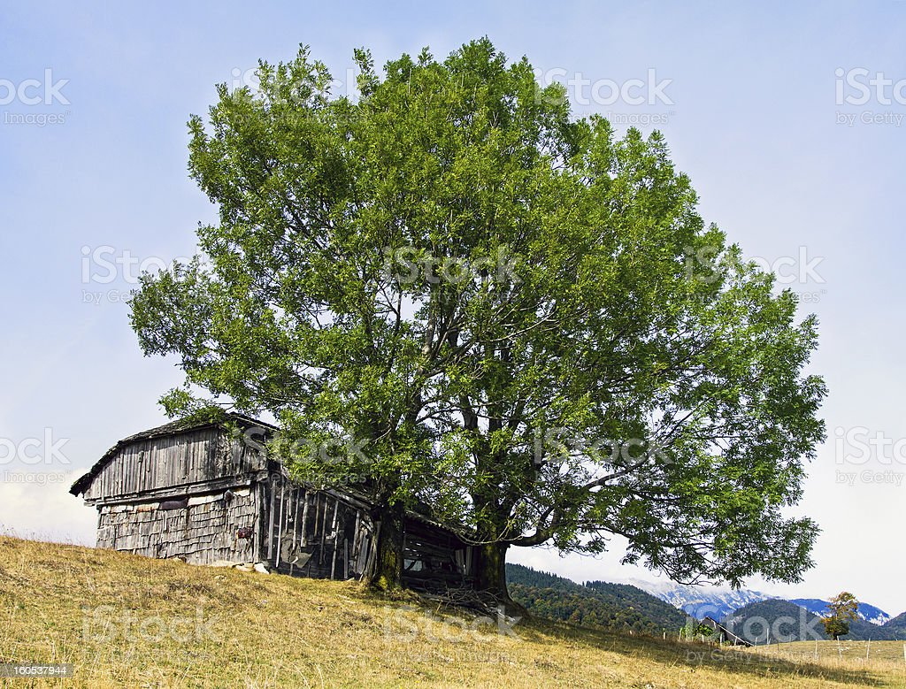 Abandoned old house in Carpathians royalty-free stock photo