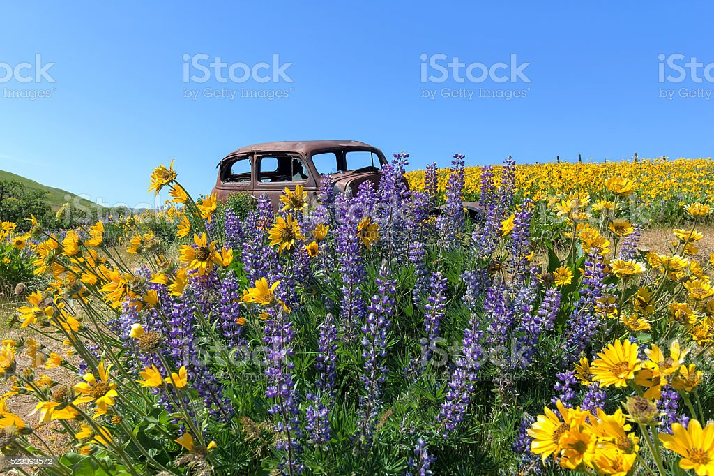 Abandoned Old Truck Among Wildflowers in Spring stock photo