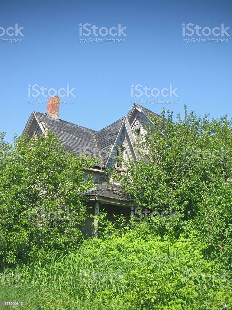 Abandoned overgrown farmhouse. stock photo