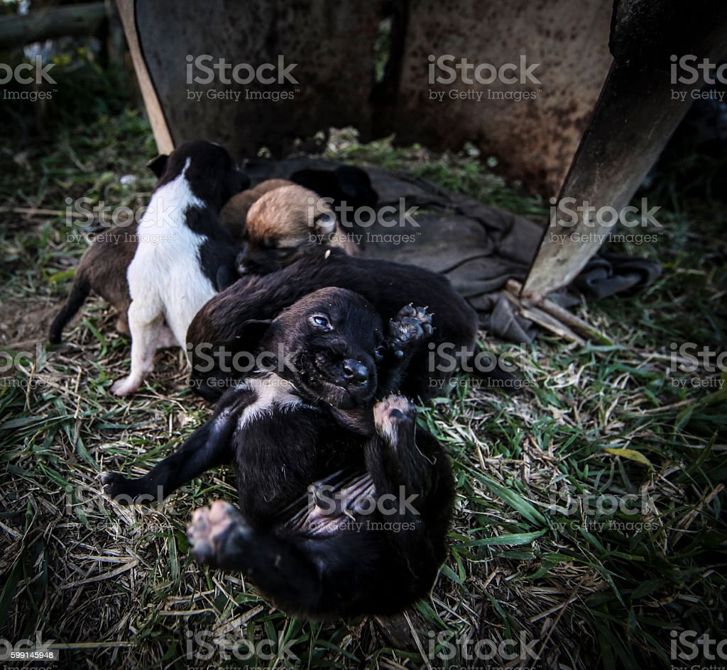 Abandoned Puppies stock photo