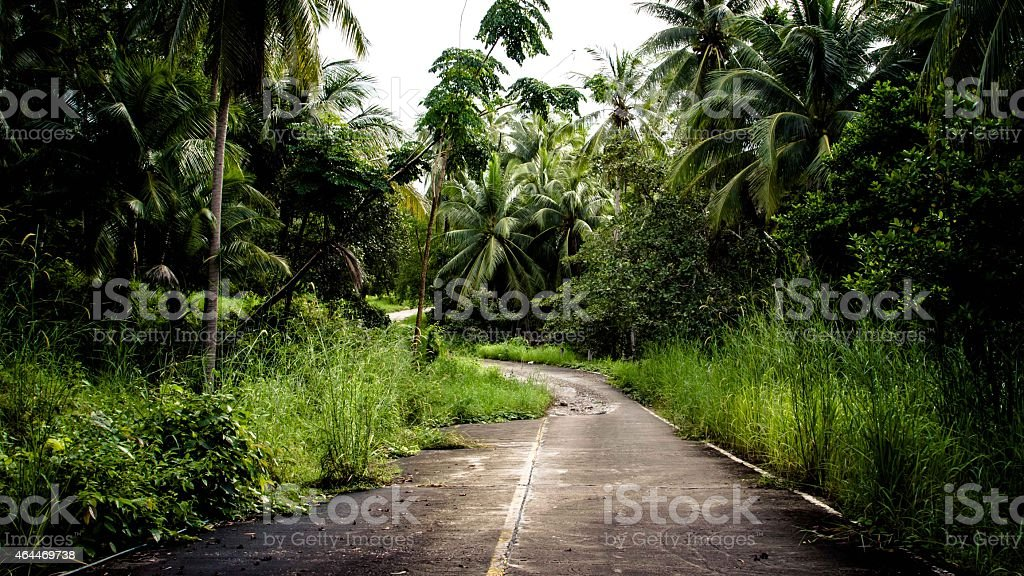 Abandoned road in the jungle stock photo
