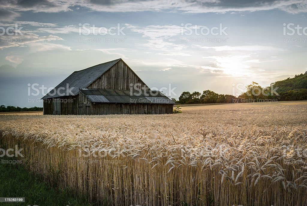abandoned shack in the field stock photo