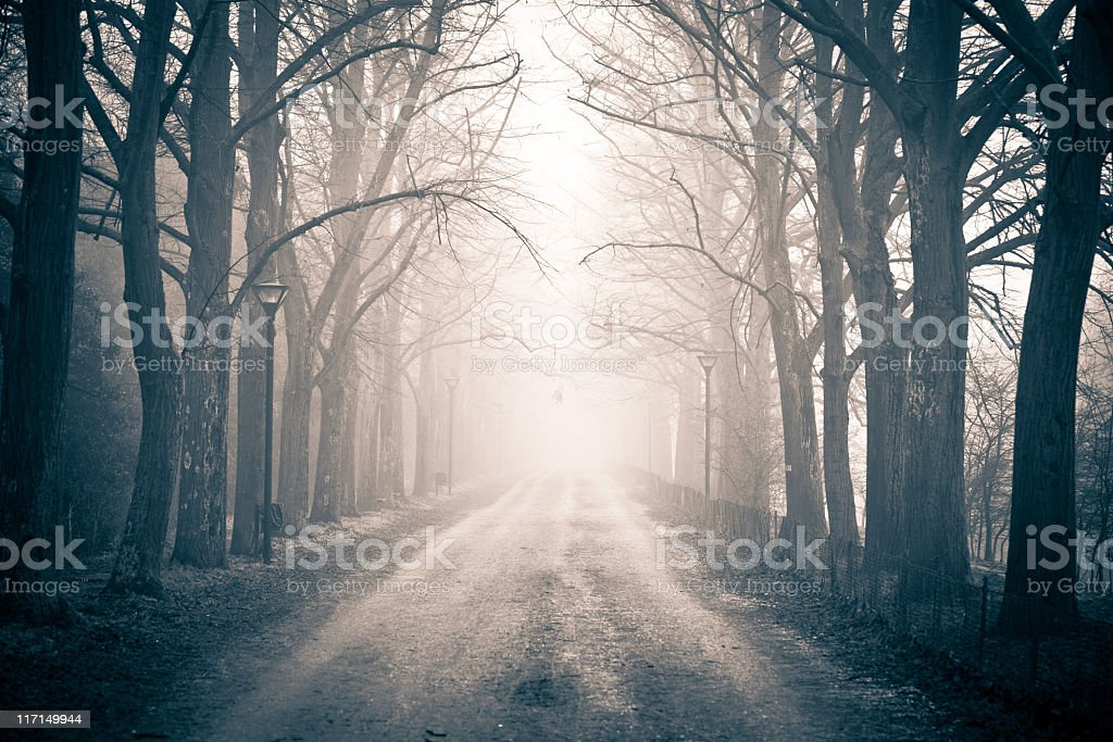 Country Road Tree Canopy in the Fog, Nobody stock photo