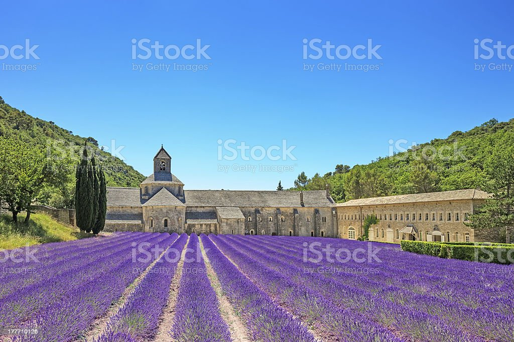 Abbey of Senanque blooming lavender flowers. Gordes, Luberon, Provence, France. stock photo