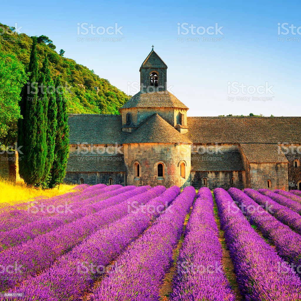 Abbey of Senanque blooming lavender flowers on sunset. Gordes, L stock photo