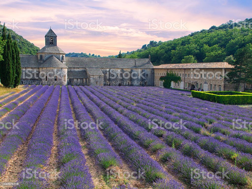 Abbey of Senanque with lavender field stock photo