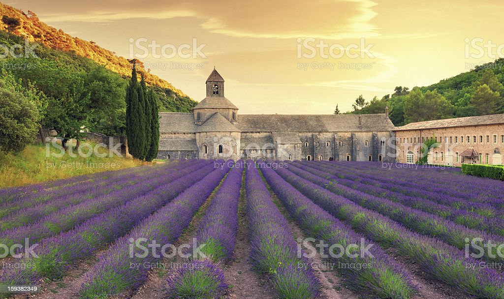 Abbey with blooming lavender field at dusk stock photo