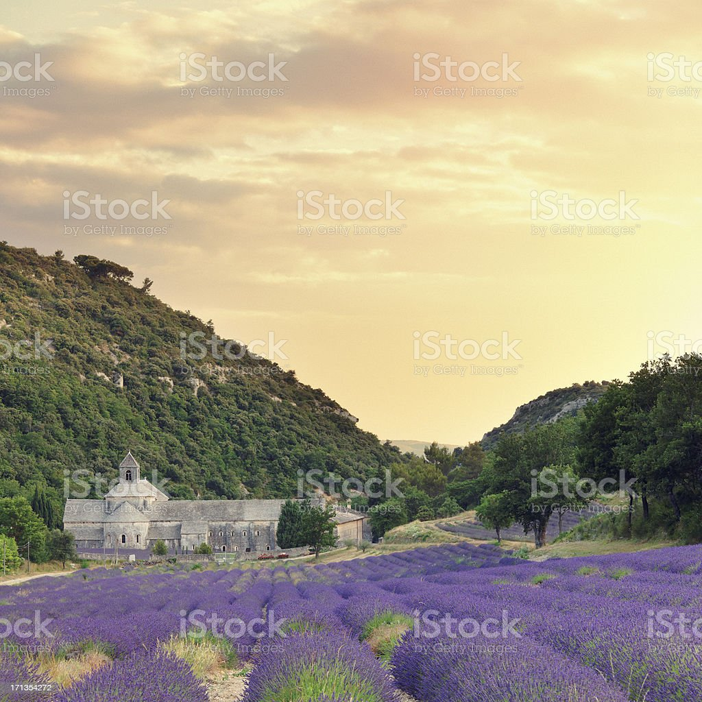 Abbey with blooming lavender field at dusk royalty-free stock photo