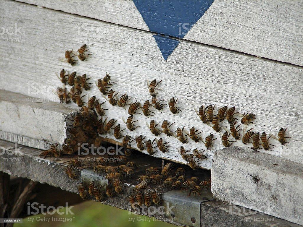 abeilles royalty-free stock photo