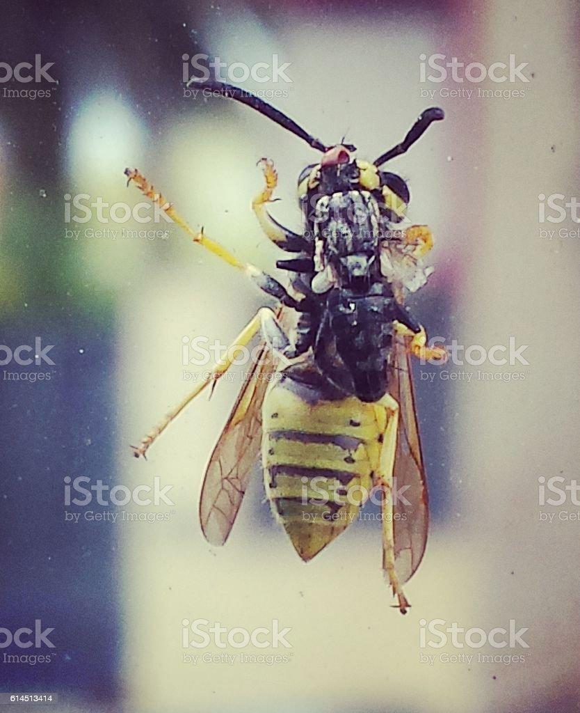 abeja desayunando modcas... stock photo