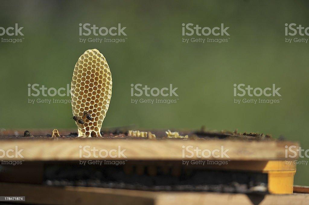 Abelhas , Apicultura / Bees Beekeeping royalty-free stock photo