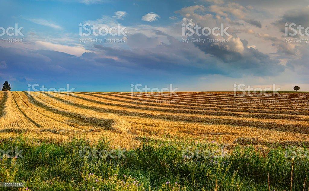 Abgeerntetes Getreidefeld stock photo