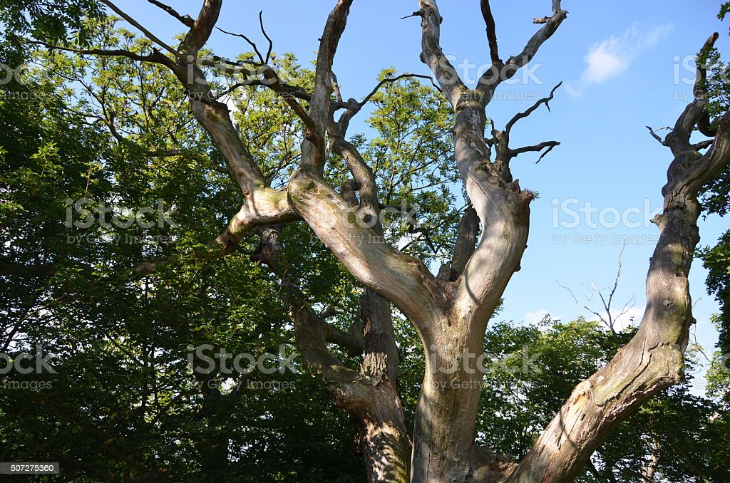 Abgestorbener Baum stock photo