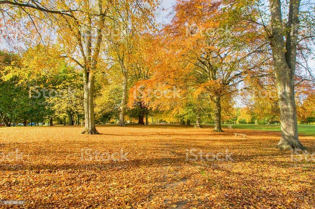 Abington Park in Autumn stock photo