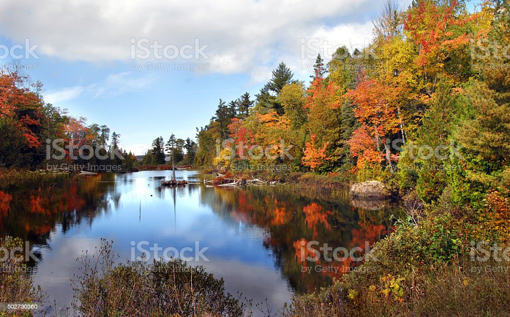 Ablaze with Color in Michigan stock photo