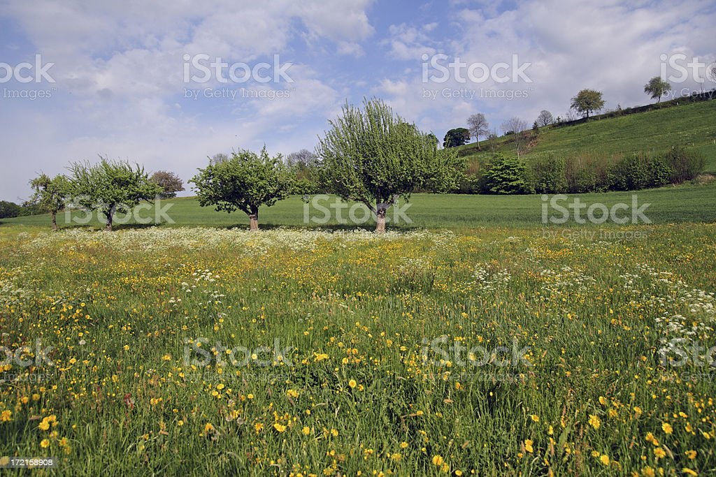Ablooming Meadow in Spring royalty-free stock photo
