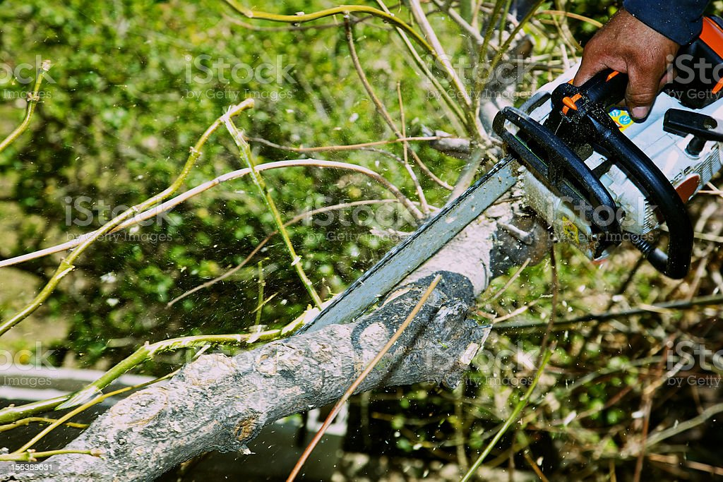 Aborist Using Chainsaw on Ash Tree Branch Sawdust Ylying stock photo