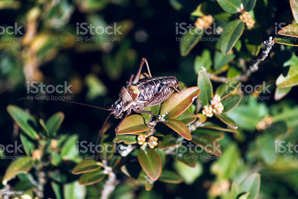 Above bush cicada stock photo