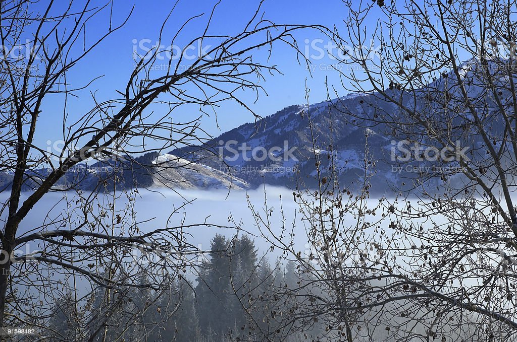 Above clouds in mountain forest royalty-free stock photo
