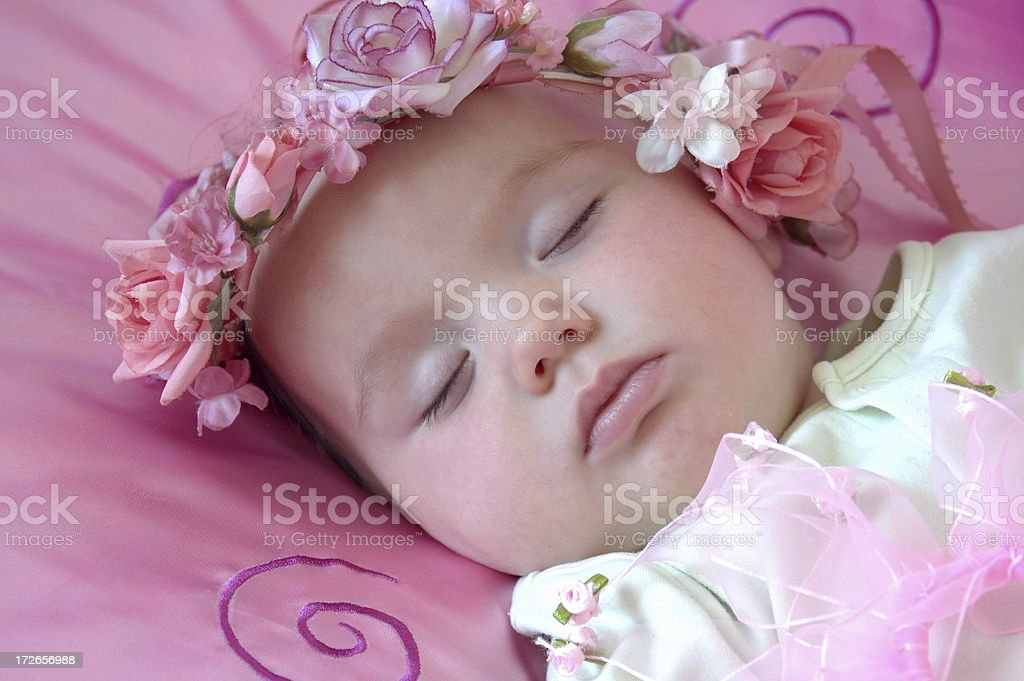 Absolutely Adorable royalty-free stock photo