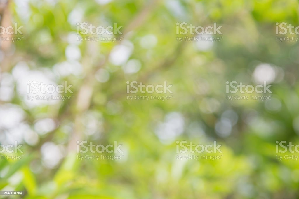 Abstrac bokeh blurs from natural tree stock photo