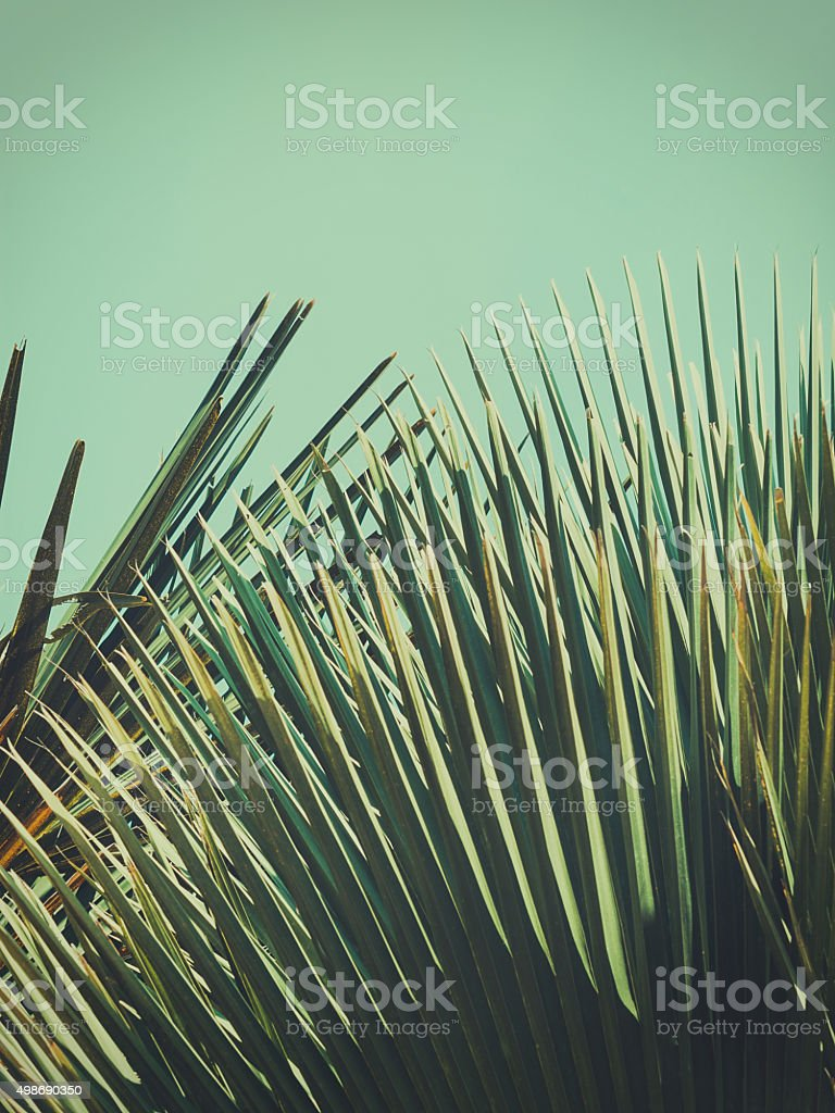 Abstrac tropical vintage background. Retro toned. stock photo