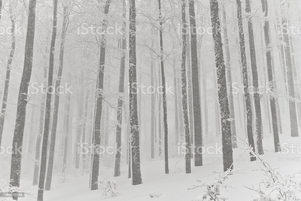 Abstrack forest in misty snowy winter royalty-free stock photo