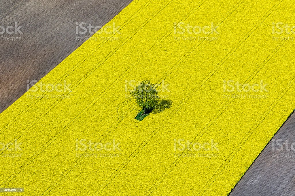 Abstract Aerial View of Canola Field stock photo