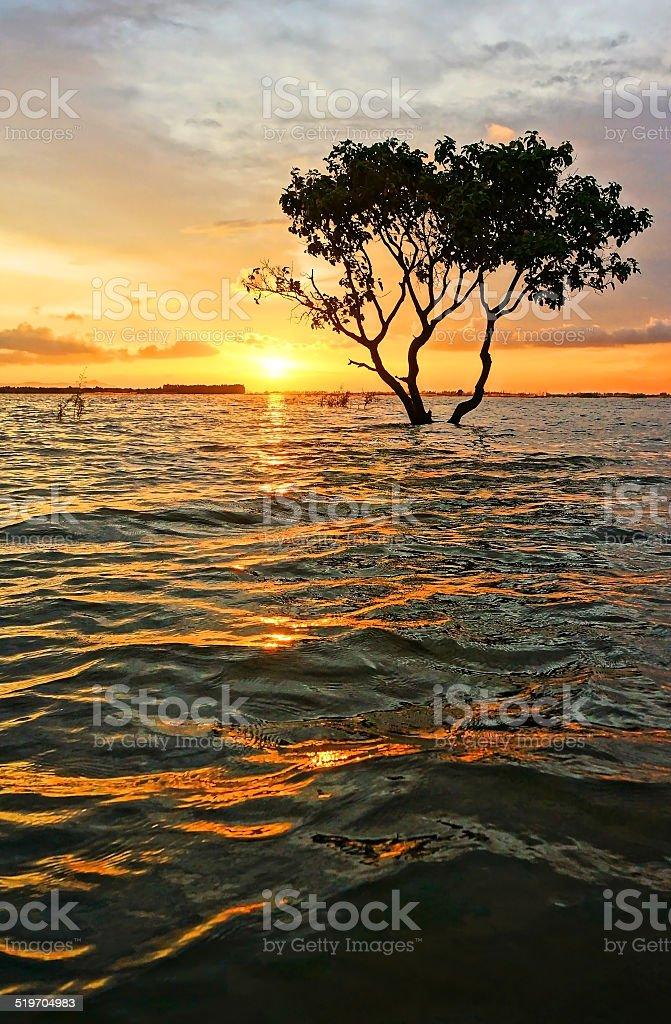 Abstract, amazing landscaping, tree, sun, ripple stock photo