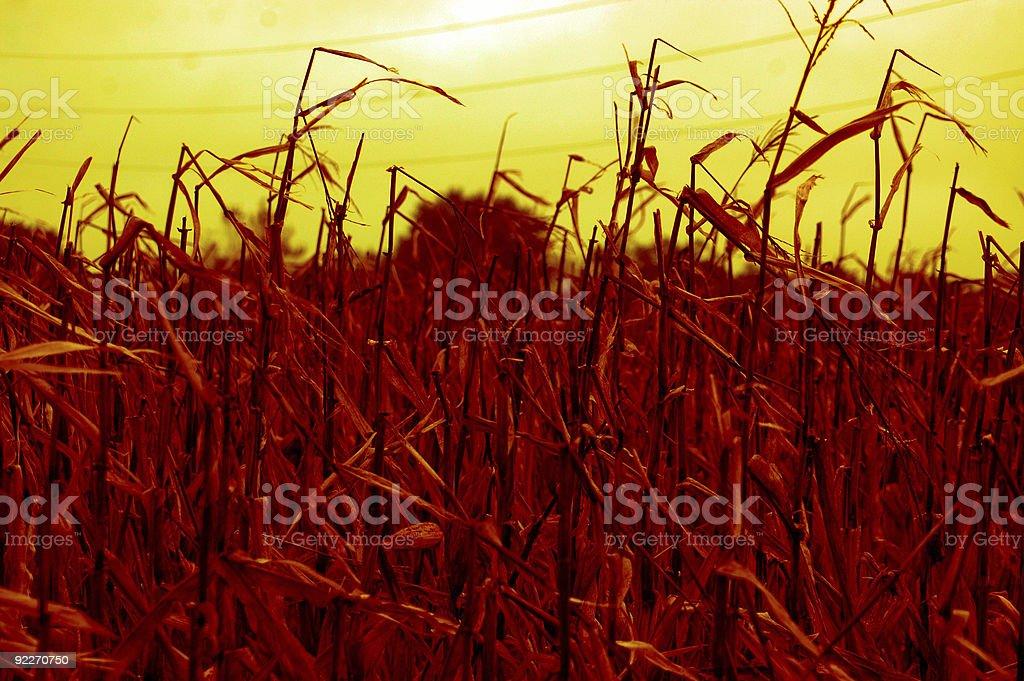abstract  Americas heartland stock photo