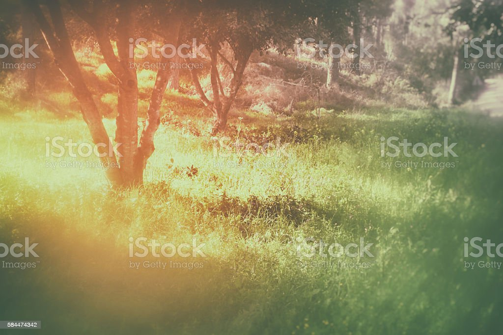 Abstract and dreamy photo of forest. Image is blurred stock photo