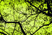Abstract art tree branch background.Retro color style.