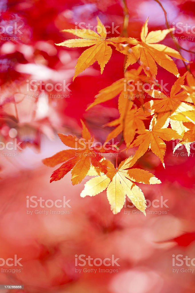 Abstract Autumn Colors royalty-free stock photo