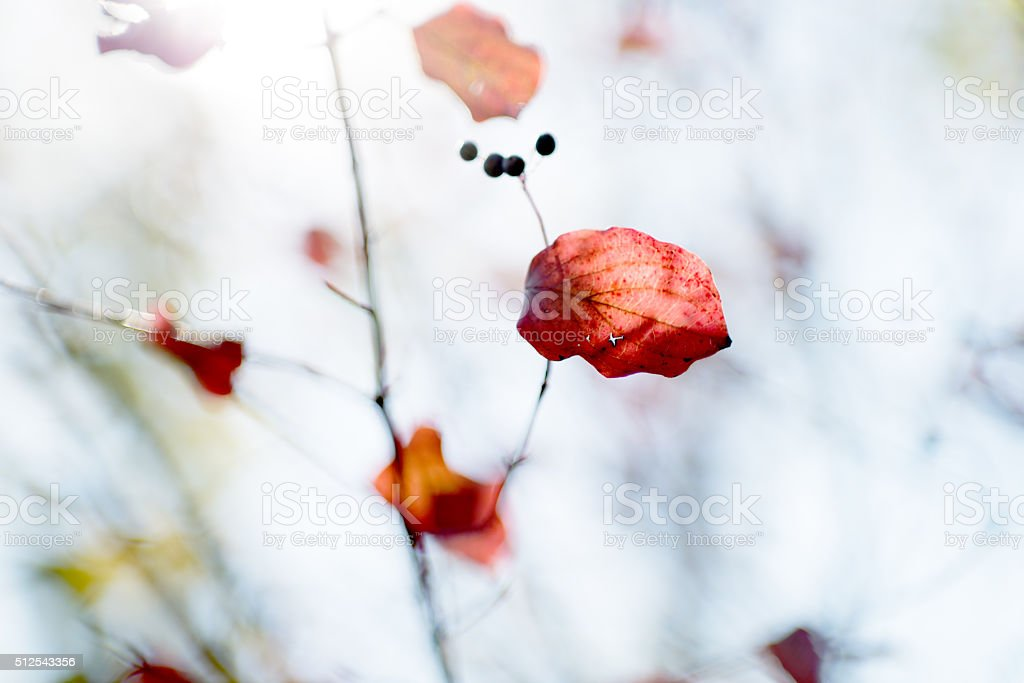 Abstract autumn leaves background with soft focus stock photo