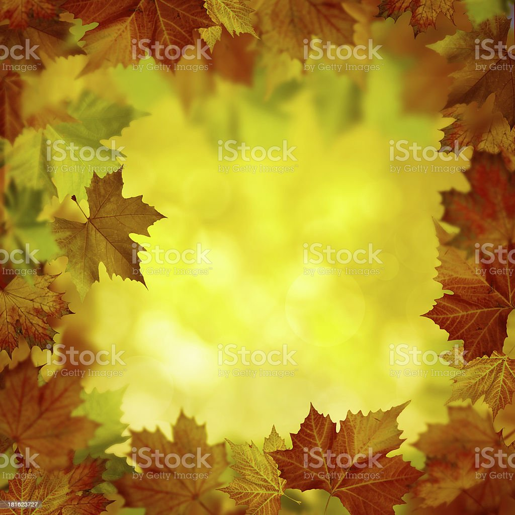 Abstract autumnal backgrounds for your design royalty-free stock photo