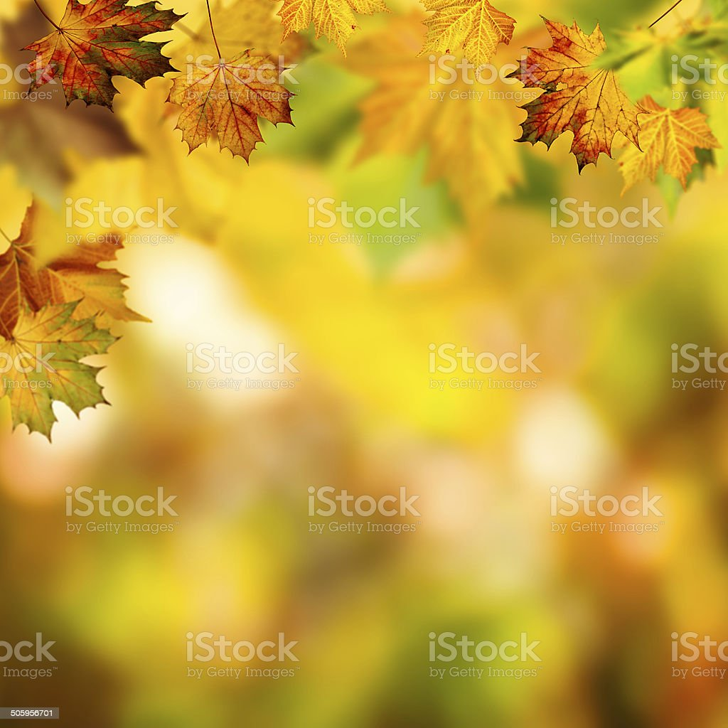 Abstract autumnal backgrounds with beauty bokeh stock photo