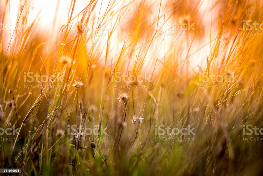 Abstract background blurted and flower grass. stock photo