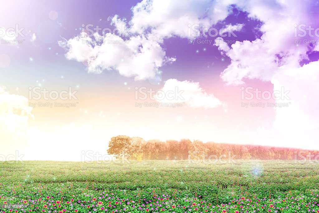 Abstract background dreamy view of purslane or sun plant flower stock photo