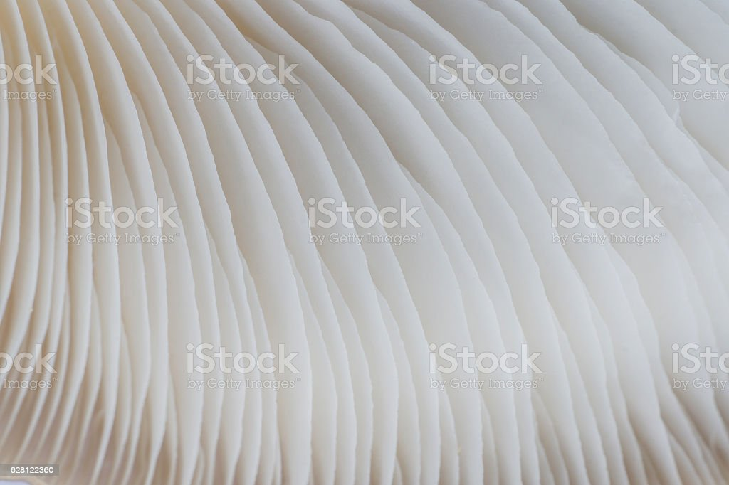 abstract background macro of Sajor-caju Mushroom stock photo