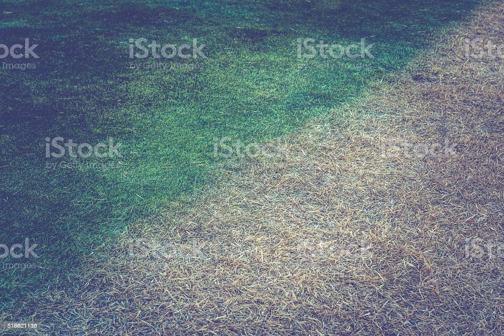 abstract background of diffent color grass lawn stock photo