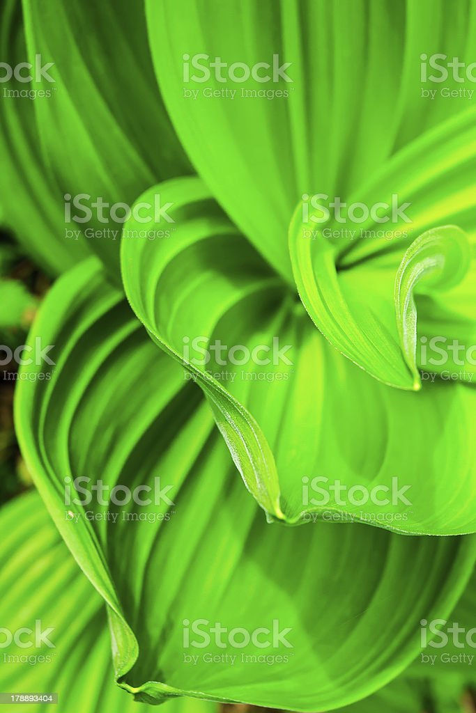 abstract background of green plant royalty-free stock photo