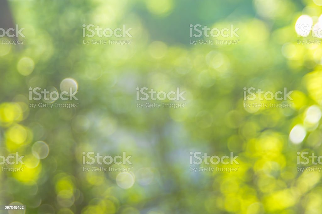 Abstract background the green leaves is bokeh in the morning. stock photo