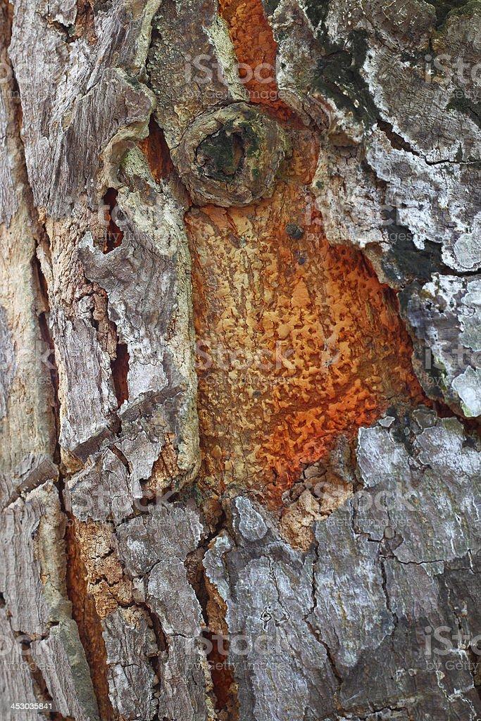 Streszczenie tło tekstura kory drzewa zbiór zdjęć royalty-free