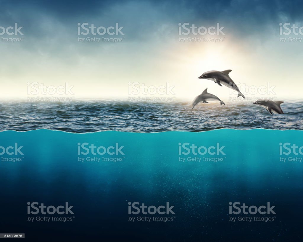 Abstract background with dolphins stock photo