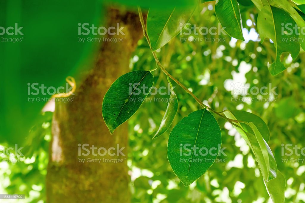 Abstract background with leaves on the tree. stock photo