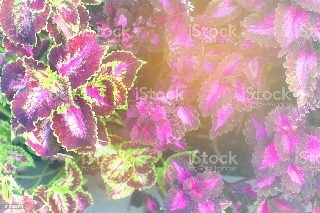 Abstract background with multicolored leaves. stock photo
